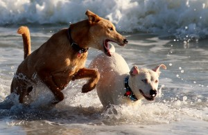 dogs-816989_1280