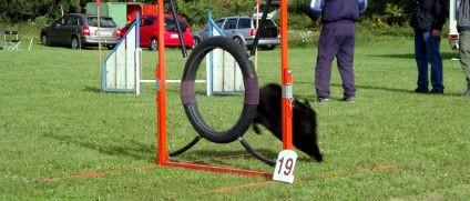 Hundetræning i Lemvig